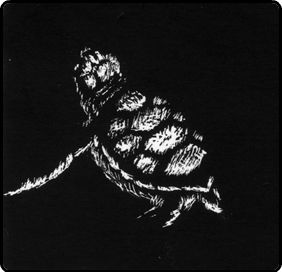 turtle drawn using scratchboard